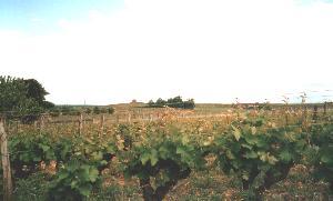 Vineyeards everywhere !