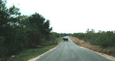 Retreat of the Elephant