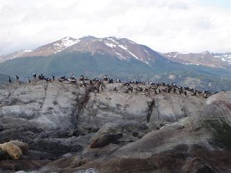 Sea birds nesting