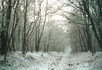 snow covered trees in park of Poeke
